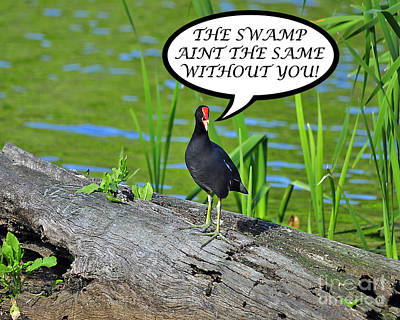 Photograph - Moorhen Swamp Card by Al Powell Photography USA