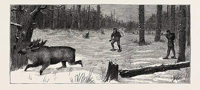 Moose Stalking, The Moose Surprised Print by English School