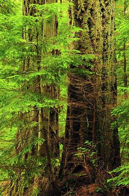 Moran State Park, Washington, Usa Print by Michel Hersen