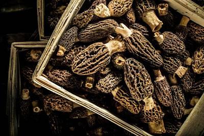Morel Photograph - Morel Mushrooms by Aberration Films Ltd