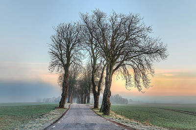 Agriculture Photograph - Morning Allee by EXparte SE