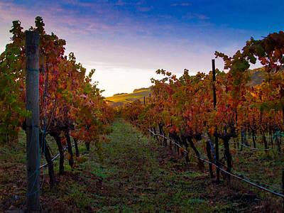 Vivid Fall Colors Photograph - Morning At The Vineyard by Bill Gallagher