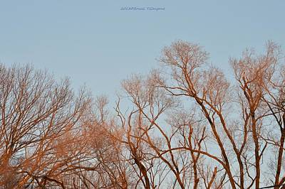 Morning Coloured In Fall Print by Sonali Gangane