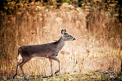 Morning Deer Print by Katya Horner