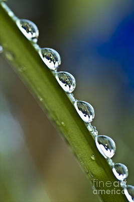 Morning Dew Drops 2 Print by Heiko Koehrer-Wagner