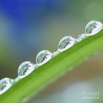 Morning Dew Drops Print by Heiko Koehrer-Wagner