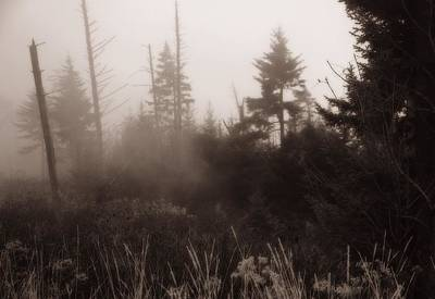 Morning Fog In The Smoky Mountains Print by Dan Sproul