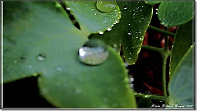 Morning Fresh Leaves With Droplets Print by Danielle  Parent