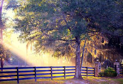 Summerfield Photograph - Morning Gate by Naomi Corey