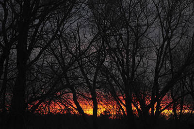 Morning Has Broken Print by Terry DeLuco