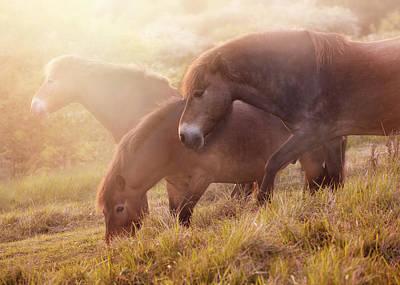 Morning Impresion With Horses Print by Jaroslaw Blaminsky