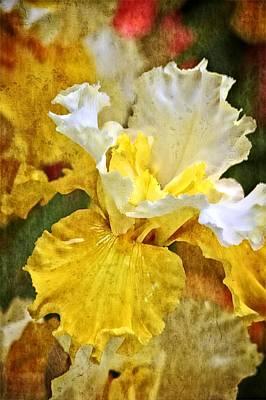 Iris Photograph - Morning Iris by Thom Zehrfeld