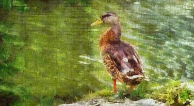Duck Mixed Media - Morning Mallard by Dan Sproul