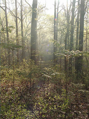 Morning Mist In The Forest Print by Bill Cannon