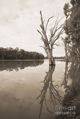 Morning On The Murray Print by Linda Lees