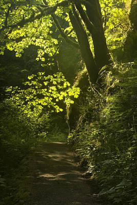 Oregon Photograph - Morning Path by Andrew Soundarajan