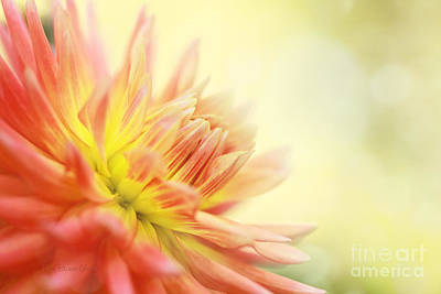Morning Serenade Print by Beve Brown-Clark Photography