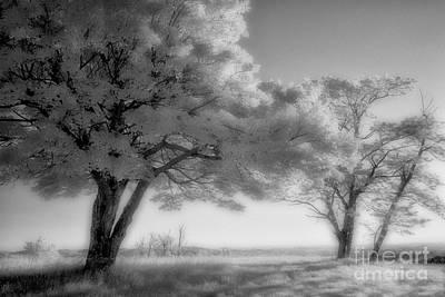 Morning Softness I - Blue Ridge Parkway Print by Dan Carmichael