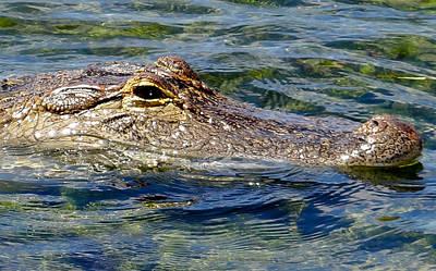 Alligator Mixed Media - Morning Swim by Dennis Dugan