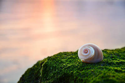 Seashell Art Photograph - By The Sea by Laura Fasulo
