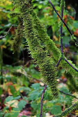 Moss Beauty Print by Jeanette C Landstrom