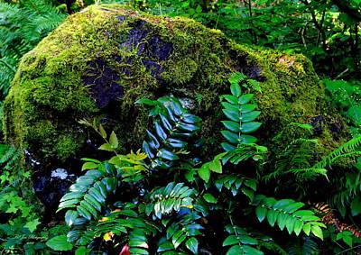 Moss Covered Boulder Print by Jeanette C Landstrom