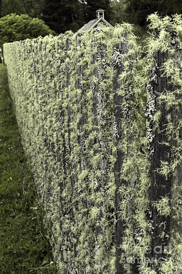 Lichen-covered Fence Photograph - Mossy Fence by Jean OKeeffe Macro Abundance Art