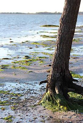 Sand Photograph - Mossy Shore by Kathleen Garman