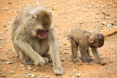 Mother And Child Macaque Print by Laura Palmer