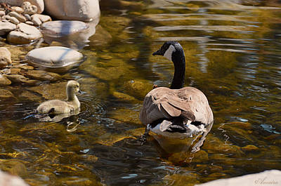 Mother Goose Photograph - Mother Goose Il by Maria Angelica Maira