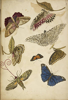 Moths And Butterfiles Print by British Library