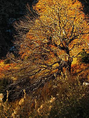 Grand Memories Painting - Mount Lemmon Burning Bush by John Haldane
