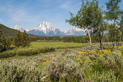 Snow-covered Landscape Photograph - Mount Moran View by Brian Harig