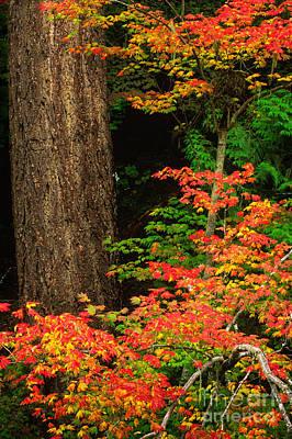 Mount Rainier Fall Foliage Print by Inge Johnsson