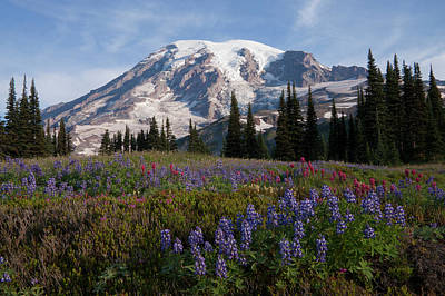 Archer Photograph - Mount Rainier National Park, Mount by Ken Archer