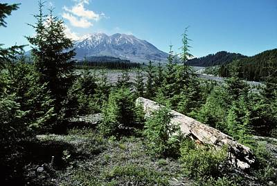 Mount St Helens Lahar Area Regrowth Print by Dr Juerg Alean