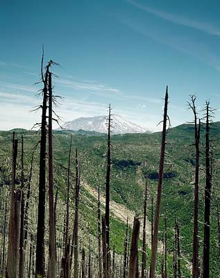 Mount St Helens Volcano And Dead Trees Print by Library Of Congress