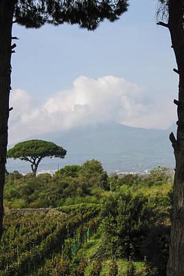 Vines Photograph - Mount Vesuvius by Adam Romanowicz