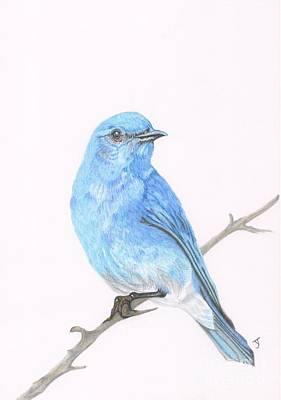 Bluebird Drawing - Mountain Bluebird by Yvonne Johnstone