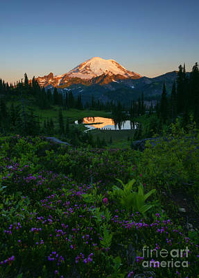 Mountain Heather Morning Print by Mike Dawson