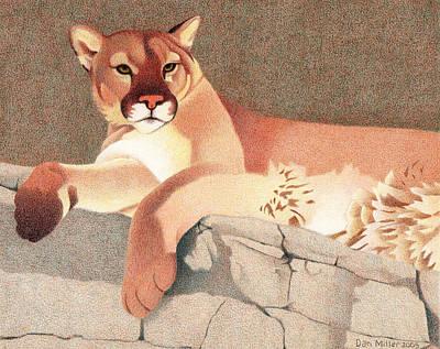 Ledge Drawing - Mountain Lion by Dan Miller