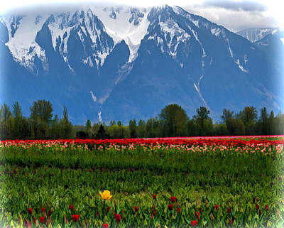 Mountain View Over A Field Of Tulips Print by Jordan Blackstone