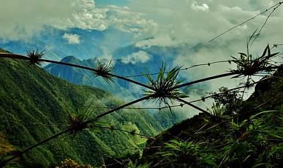 Peru Photograph - Mountain Vines  by Sarah Pemberton