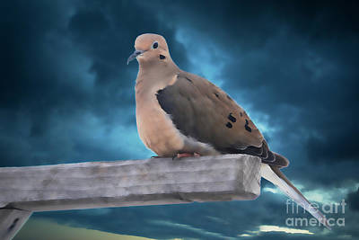 Dove Mixed Media - Mourning Dove Blue Sky by Marjorie Imbeau