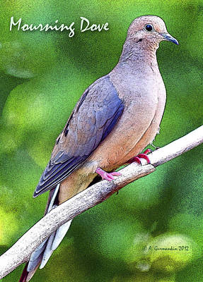 Print featuring the photograph Mourning Dove Digital Art by A Gurmankin