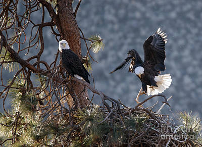American Bald Eagle Photograph - Move Over by Mike Dawson