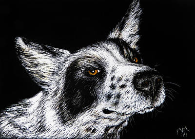 Cattle Dog Drawing - Mr. Cool by Monique Morin Matson