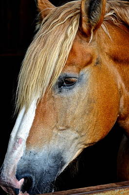 Mr Ed Print by Frozen in Time Fine Art Photography