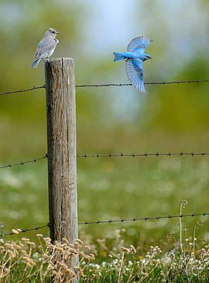 Mr Mrs Blue Bird Original by Randy Giesbrecht