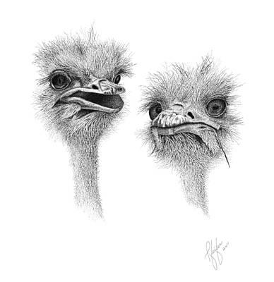 Emu Drawing - Mr. Mrs. O by Linda Pfeifer